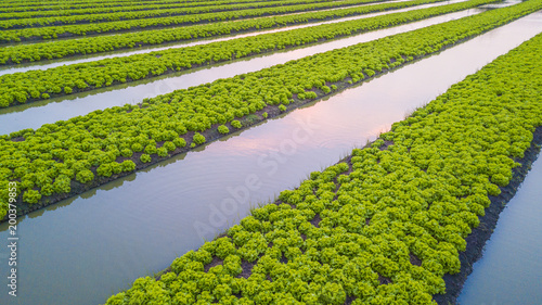 Top View Agricultural Industry Growing Salad Lettuce On Field Aerial Vegetable Garden