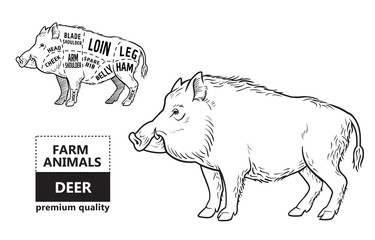 Wild hog, boar game meat cut diagram scheme - elements set on chalkboard. Vector illustration