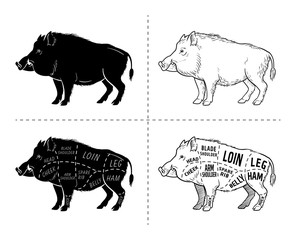 Wild hog, boar game meat cut diagram scheme - elements set on chalkboard. Vector illustration