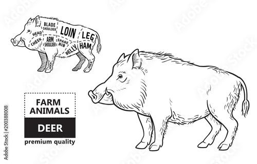 Wild hog, boar game meat cut diagram scheme - elements set