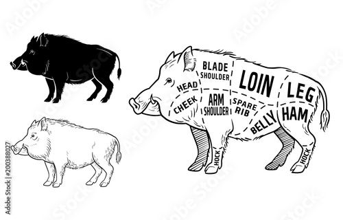 u0026quot wild hog  boar game meat cut diagram scheme