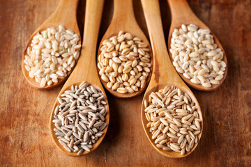 Grains and cereals in wooden spoons. Oats, wheat, rye, secale, barley, integral rice.