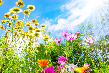Colorful summer wildflower meadow, blue sky