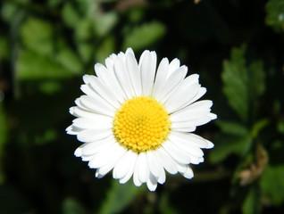 Sol floral.