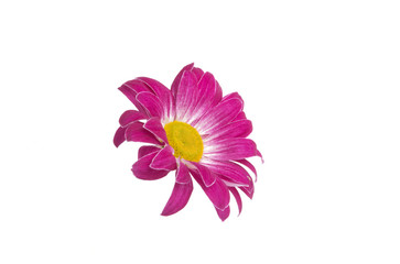 beautiful pink flower isolated on white