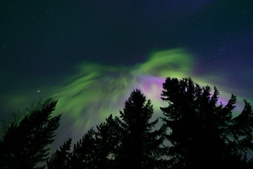 Colorful northern lights and treetops