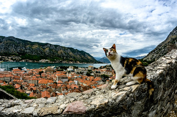A cat sits on a high stone wall overlooking the city