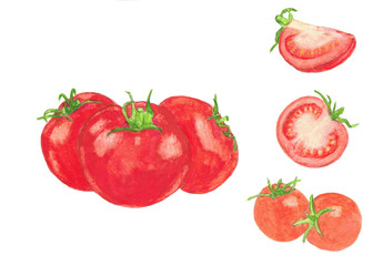 Tomatoes  watercolor illustration isolated on white background. Hand drawn painting.