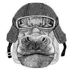 Behemoth, hippo with motorcycle helmet. Vintage motorcycle headdress. Illustration for children, kindergarten kids. Print for children shirt, clothing, tattoo, emblem, badge, logo, patch, t-shirt