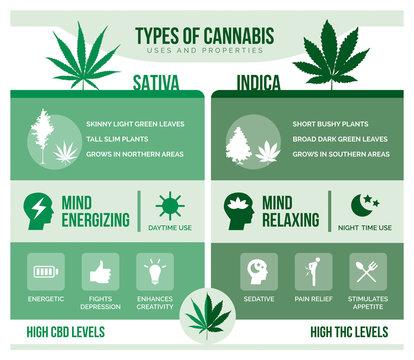 Cannabis sativa and cannabis indica health benefits