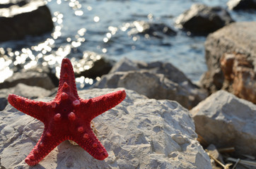 Red sea star on a white sea rock with a sea in a background