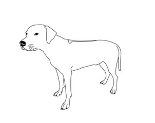 Hound Photos Royalty Free Images Graphics Vectors Videos