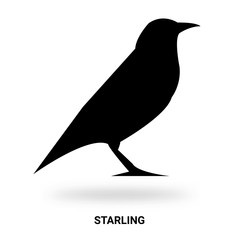 starling silhouette isolated on white background