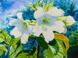 Watercolor  painting original realistic white color of Herald trumpet flowers.