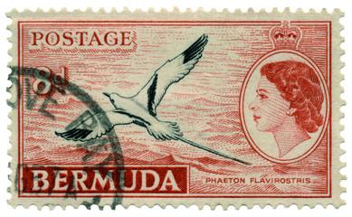 Bermuda Phaeton Flavirostris Postage Stamp
