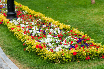 flower bed with colorful flowers in the park