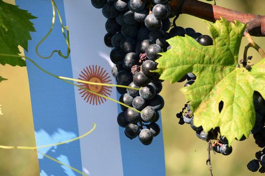 Vino argentino Argentinsk vin النبيذ الأرجنتيني Argentijnse wijn Argentyńskie wino Mendoza Argentinischer Wein יין ארגנטינאי Argentin bor Argentina Аргентинское вино 阿根廷葡萄酒