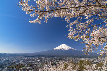 新倉山浅間公園より富士山と桜