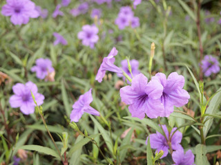 close up flower in the garden