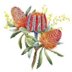 Watercolor australian banksia floral composition