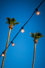 String of Light Bulbs With Palm Trees in the Background Vertical Orientation with Focus on Lights