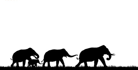 Wall Murals Panther silhouette elephants in the landscape on white background.