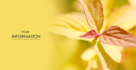 Yellow leaves macro photo blur in the sun