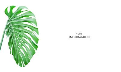 Tropical leaf green photo pattern