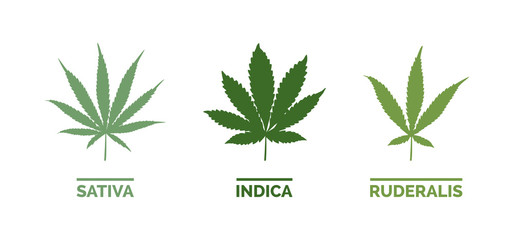 Cannabis types and leaf shapes