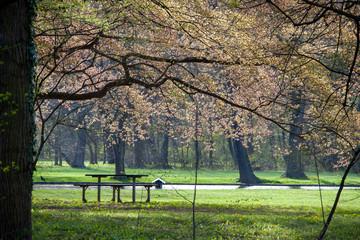 Frühling im Schlosspark Laxenburg