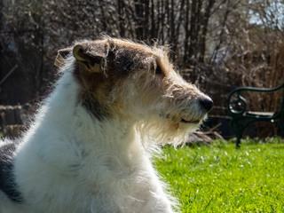 Schweinehund Portrait