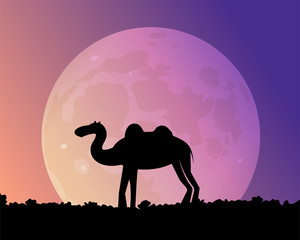 Night camel in the desert. Large moon. Vector illustration. Animals Asia.