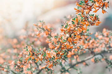 Nature spring pastel background with blossoming flowers. Flower nature