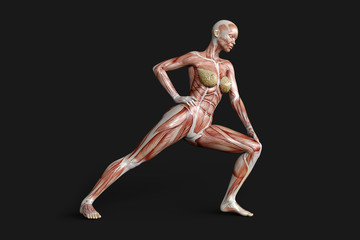 Female figure with muscle maps 3D rendering isolated on dark grey background