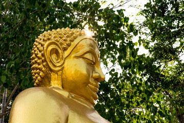 Buddha statue with trees.