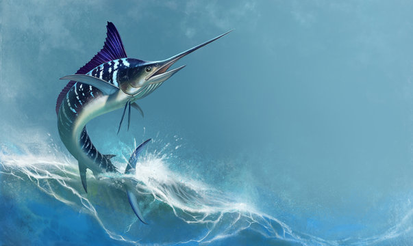 striped marlin on sea, fish sword