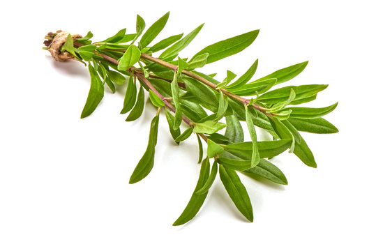 Sprig of thyme, isolated on white background.