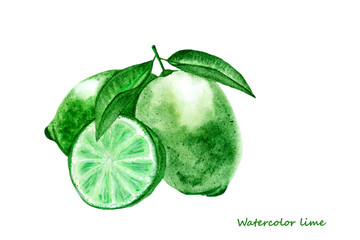 Watercolor lime. Isolated citrus fruit illustration on white background