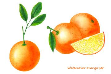 Watercolor orange. Isolated citrus fruit illustration on white background