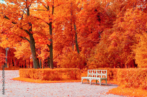 Autumn Colorful Landscape Wooden White Bench In The Autumn