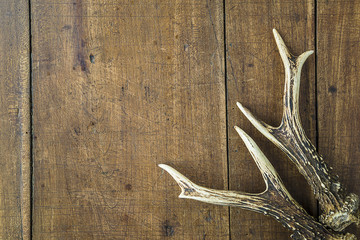 Beautiful deer horns on old wooden background with copy space