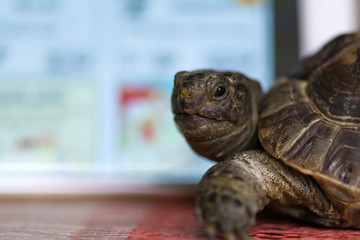 Turtle and smartphone screen