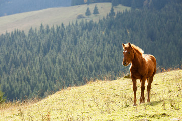 Brown horse grazing on the lawn on a background of mountains
