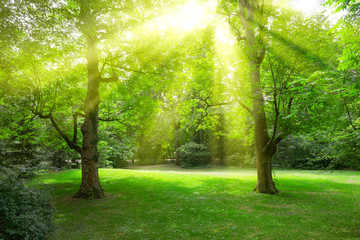 Sunlight through leaves trees in park.