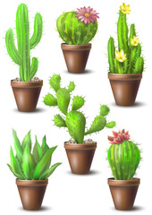 Cactus images set. Vector illustration