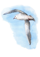 Beautiful seagull flying into the sky. Watercolor hand drawn illustration.