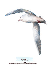 Beautiful seagull flying into the sky. Watercolor hand drawn illustration, isolated on a white background.