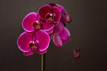 Tuinposter Orchidee Pink orchid on a black background