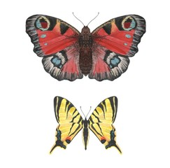 Two watercolor butterflies on white background isolated