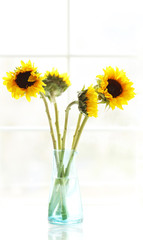 A vase with four sunflowers in a sun drenched window.